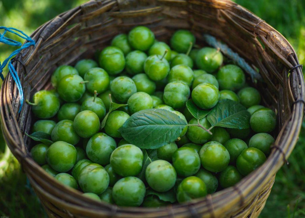yeşil erik faydaları