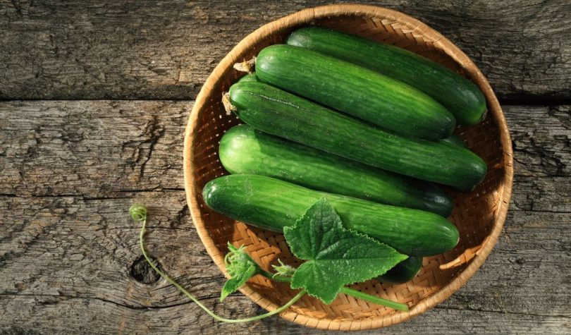 Salatalık Faydaları ve Besin Değerleri Nedir?