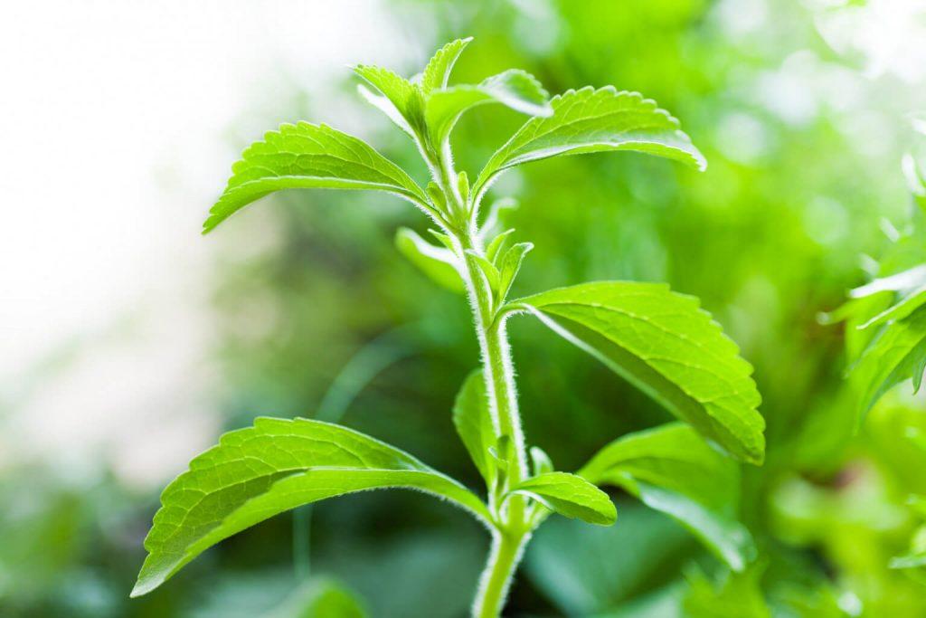 stevia faydaları