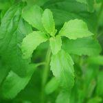 Bitkisel Şeker Stevia Faydaları Nelerdir?